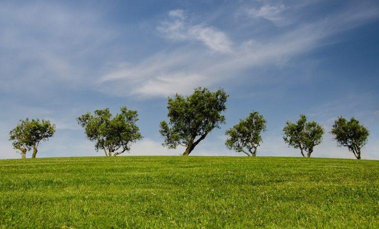 El Debate sobre las licencias ambientales