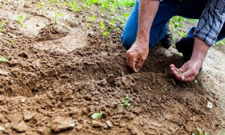 suelo agricultura agro