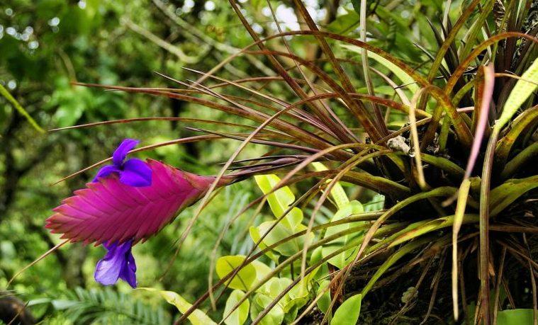 amazonía colombia