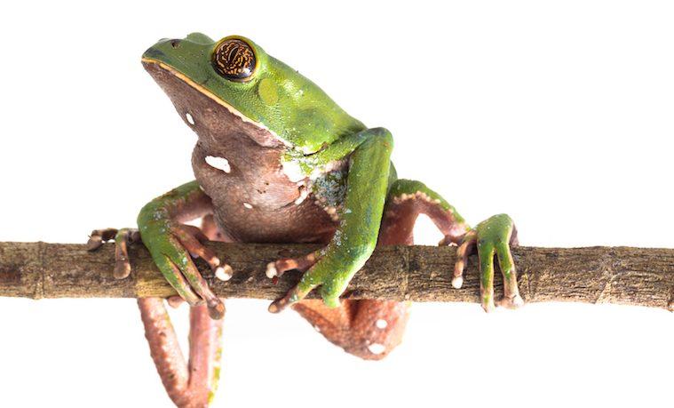 Día Mundial de la Diversidad Biológica