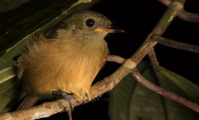 Colombia líder mundial en registro de aves – GBD