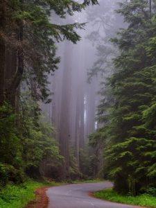 Contribuciones para una filosofía forestal
