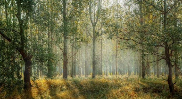 ¿Qué estamos entendiendo por desarrollo forestal?