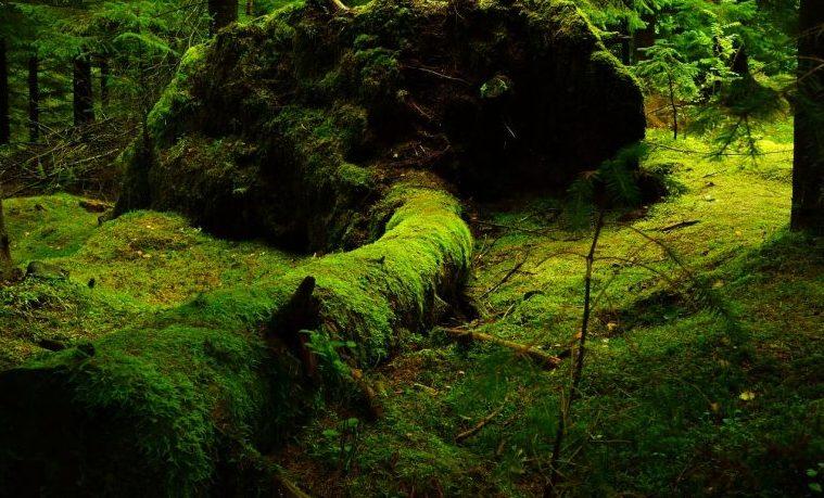 El pequeño mundo del musgo que levanta pasiones en Japón