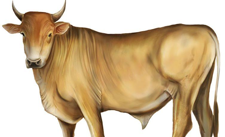 Una propuesta: excluir áreas del país con ganadería de alto impacto y baja productividad