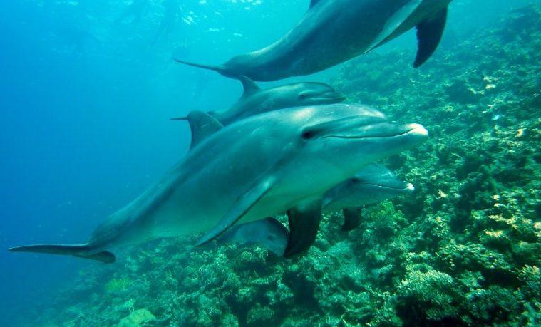 delfín delfines