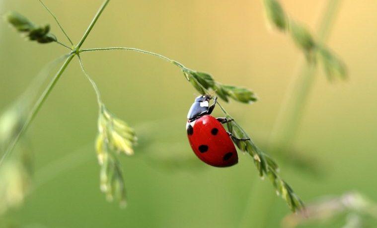 Los insectos hambrientos dañarán más los cultivos por el cambio climático