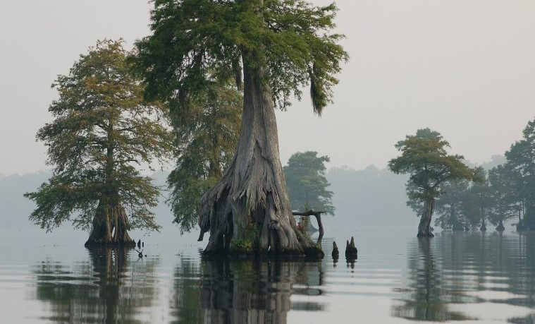 Humedales desaparecen tres veces más rápido que los bosques