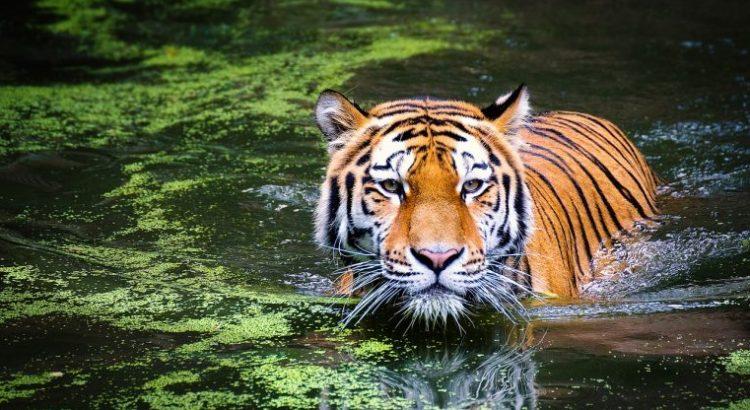 """Qué dice el informe """"Planeta Vivo"""" de WWF"""