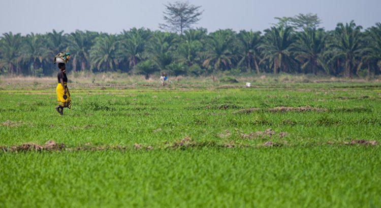 Abordar el cambio climático en los países más pobres