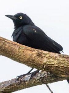 Aves buscaron ecosistemas de mayor altura por causa del cambio climático
