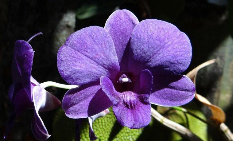 Londres celebra con 10.000 orquídeas la biodiversidad única de Colombia