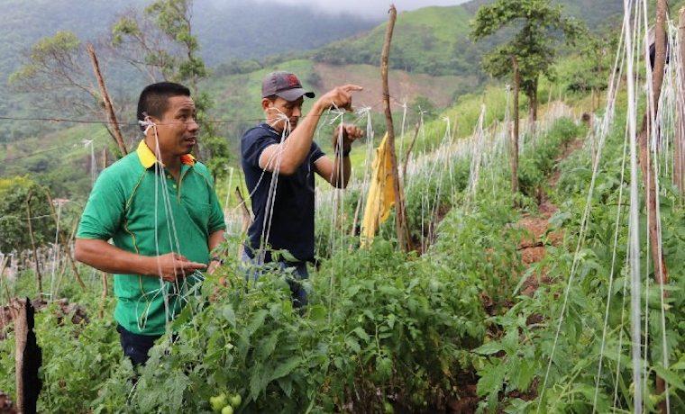 Exguerrilleros alimentan a niños en las escuelas de Colombia