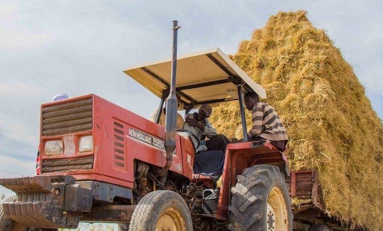 Cosechar prosperidad a través de la innovación y la tecnología en la agricultura