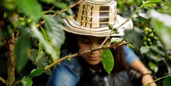 En Colombia, la paz se consigue paso a paso