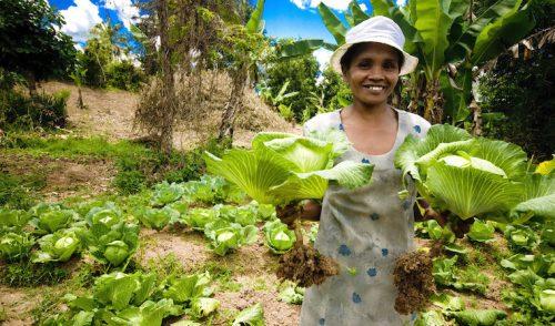 Los agricultores, primeras víctimas del cambio climático