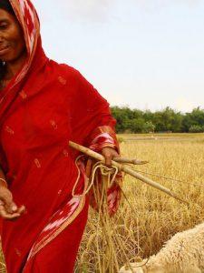 Enfrentarse al reto del ODS2: es el momento de actuar