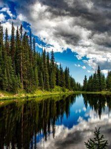 Los árboles son más que captura de CO2 …