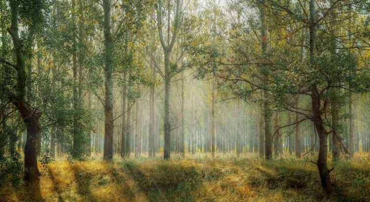 Complejidad de los bosques tropicales y reactivación económica