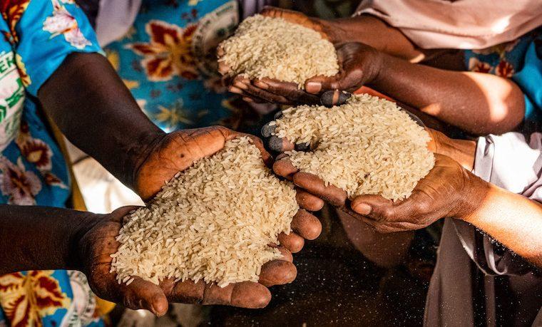 Con el aumento del hambre y la persistencia de la malnutrición, el logro del hambre cero para 2030 es dudoso, advierte un informe de las Naciones Unidas