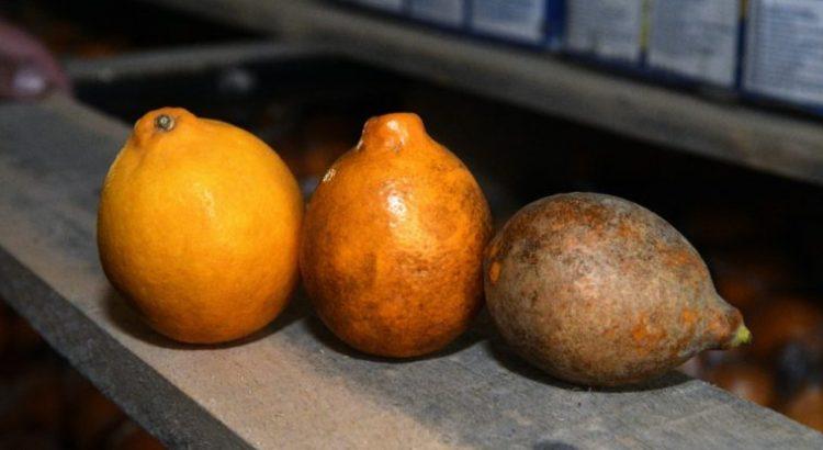 Tres formas inteligentes en que la innovación ayuda a reducir la pérdida y el desperdicio de alimentos