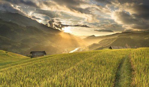 La genética: clave para mejorar la sostenibilidad alimentaria