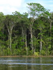 Aliwa: la selva amazónica que emergió en un cráter de hace 30 millones de años