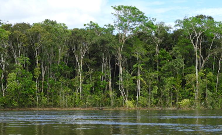 Aliwa selva amazónica cráter Instituto Humboldt