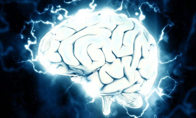 conocimiento cerebro brain