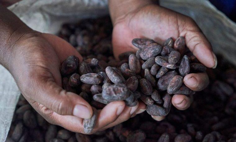 El café y el cacao hacen la vida más dulce
