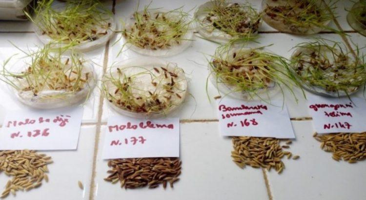 La biodiversidad de las semillas: el seguro de vida de nuestra producción alimentaria