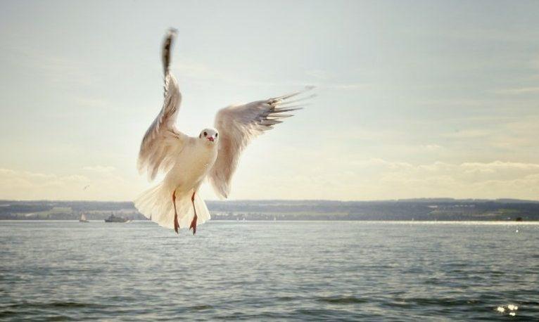 naturaleza aves paisaje vida wildlife