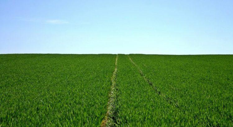 ¿Por qué la tenencia de la tierra es esencial para los sistemas alimentarios sostenibles?