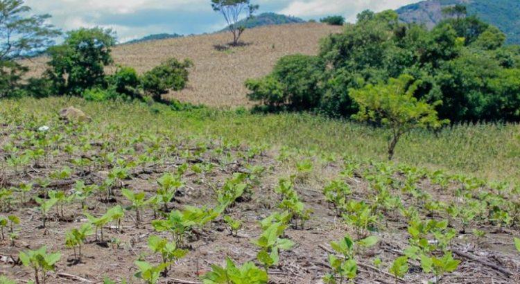 ¿Por qué las aptitudes generales son parte esencial de la innovación agrícola?
